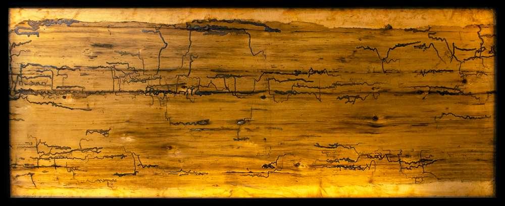 Description of Inspect Writing on Cedar Tree (Cuneiform) follows at next button